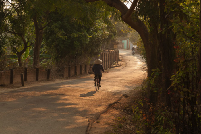 person on bicycle riding path in forest