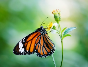 macro photo butterfly