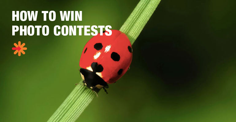 How to Win Photography Contest