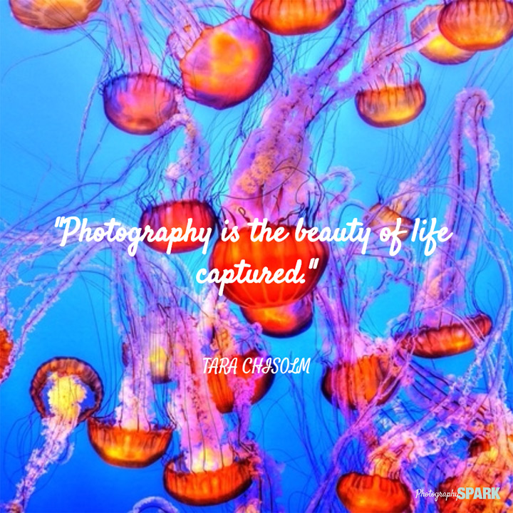 23 of the most famous quotes about photography.
