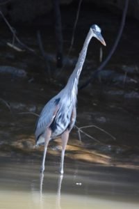 Best Budget Lens for Bird Photography
